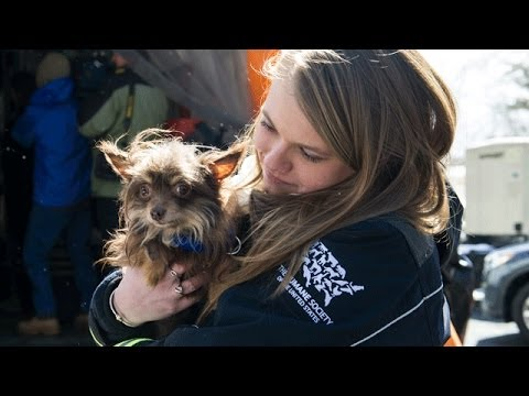 55 Rescued Arkansas Dogs Begin New Lives