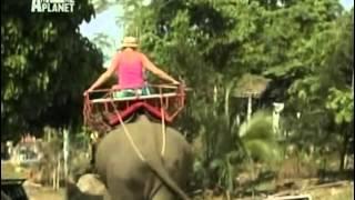 Zvierací rekordmani - Chvastúni