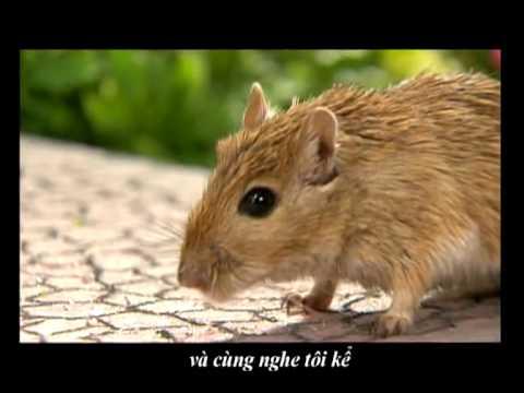G-Mouse rap - Hoàng Sơn
