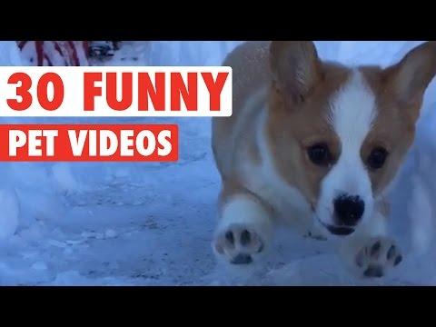 30 Funny Pet Videos Animal Compilation 2016