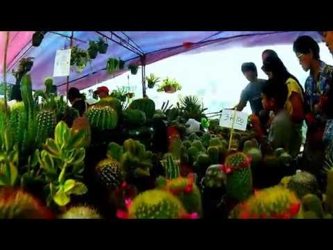 GoPro: Panagbenga 2014 Baguio City