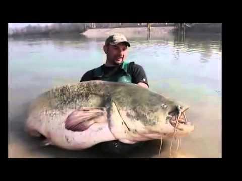 Câu cá lớn nhất thế giới mà tôi từng xem .!!