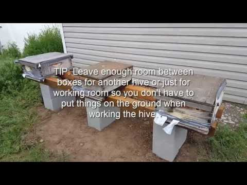 BEGINNING BEEKEEPING: Setting Up The Apiary