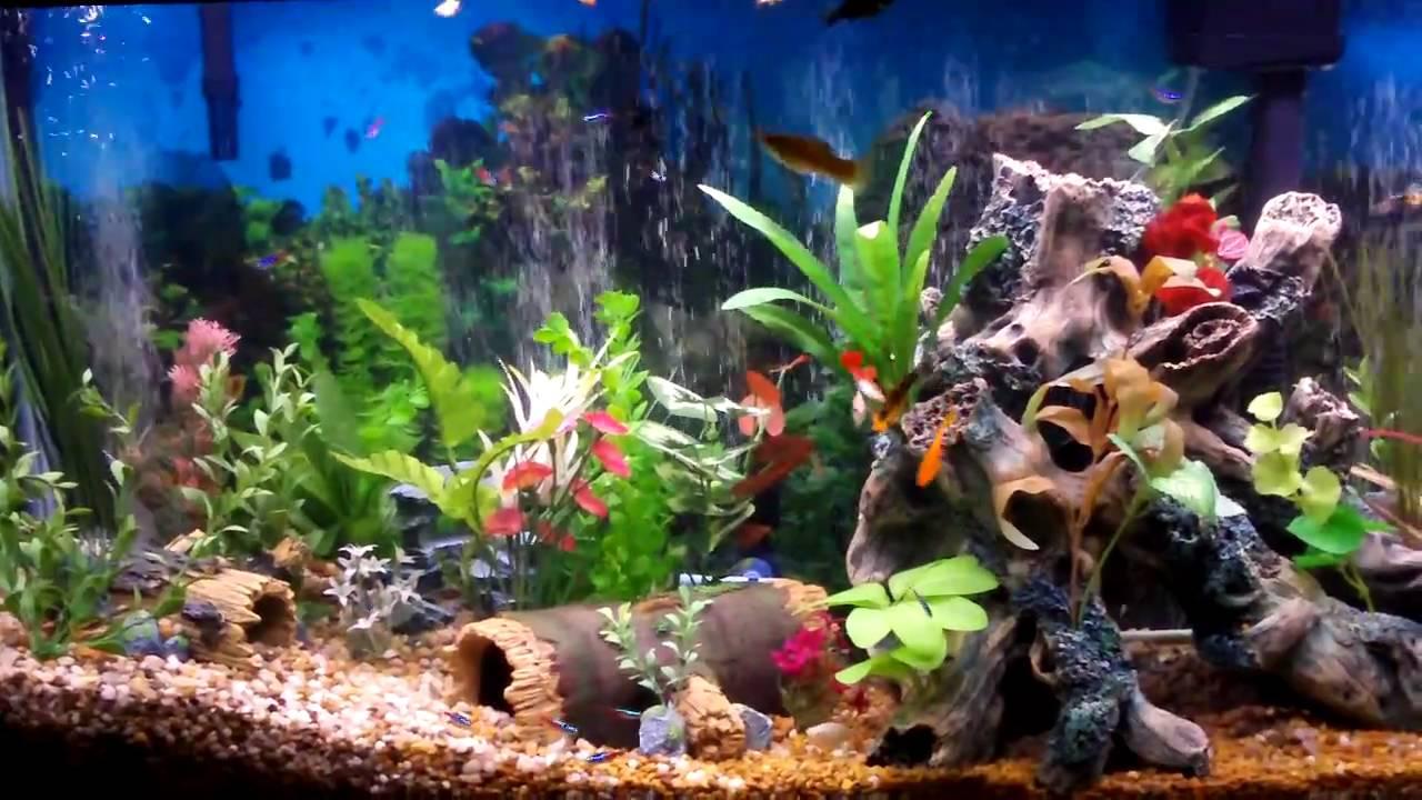 Best Fish Tank Aquarium I Ever Created Beautiful Youtube