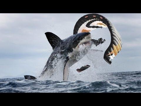 SHARK ATTACK Kiteboarder — Melbourne, Australia 2014