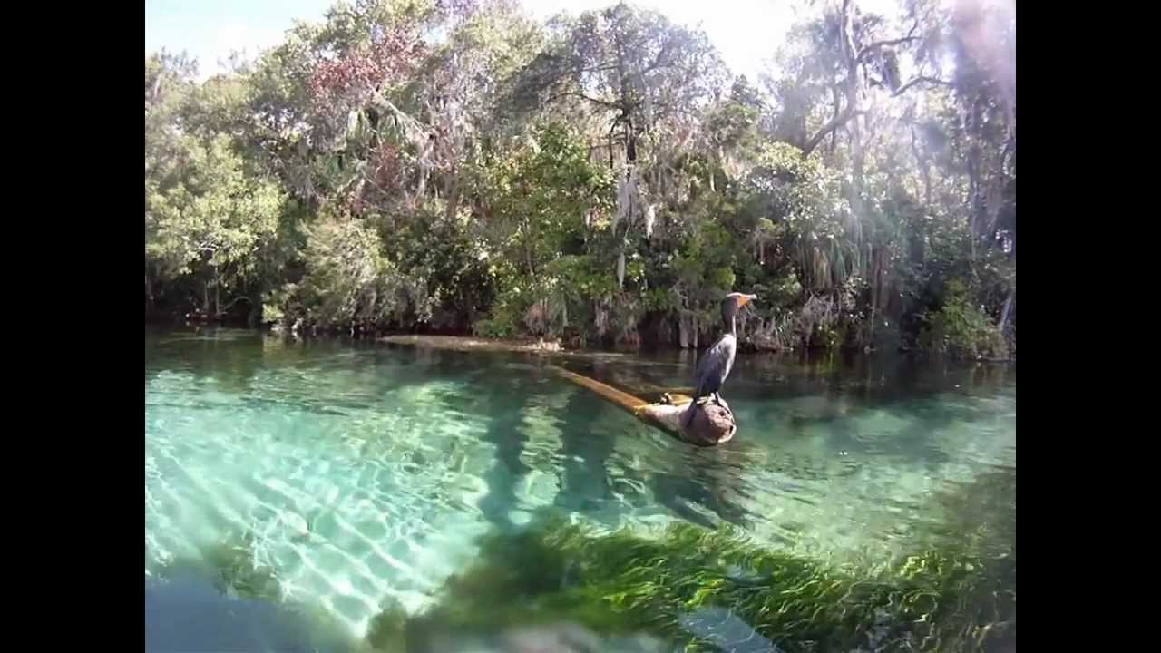 Rainbow Springs State Park Free Diving With Geoffrey