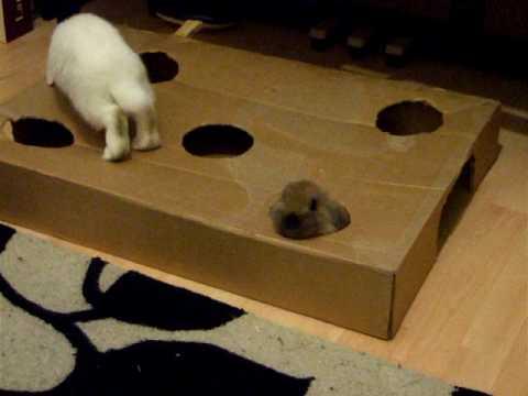 Homemade Rabbit Toys 32