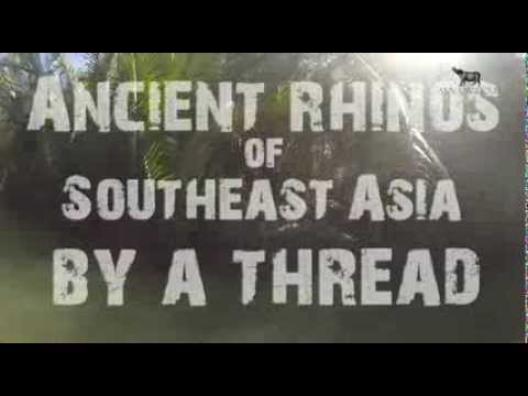 Ancient Rhinos of Southeast Asia: By A Thread