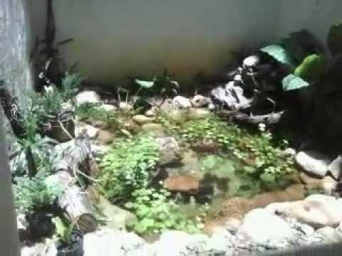 Vida Ecológica Lagos Ornamentais Lago Plantado