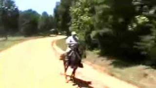 One Of The Fastest Singlefooter,racking Horse, In The