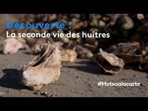 Découverte : la seconde vie des huîtres