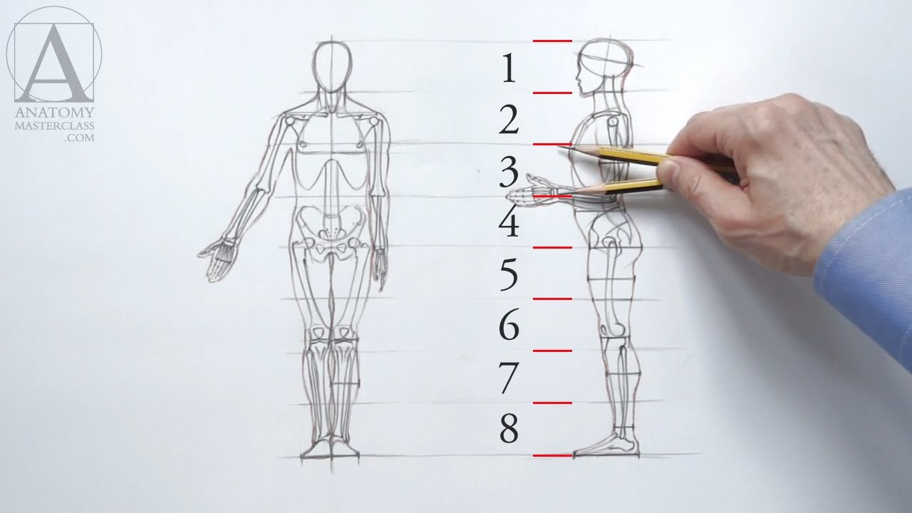 Anatomy guide drawing