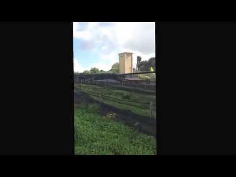 LA LUMACA VT-recinti pronti per mettere i riproduttori (allevamento di lumache)
