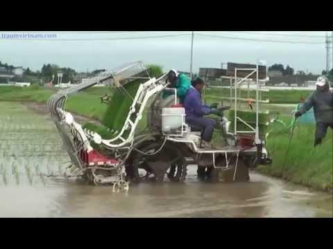Xuất khẩu lao động Nhật Bản - Cấy lúa tại Nhật Bản (P1)