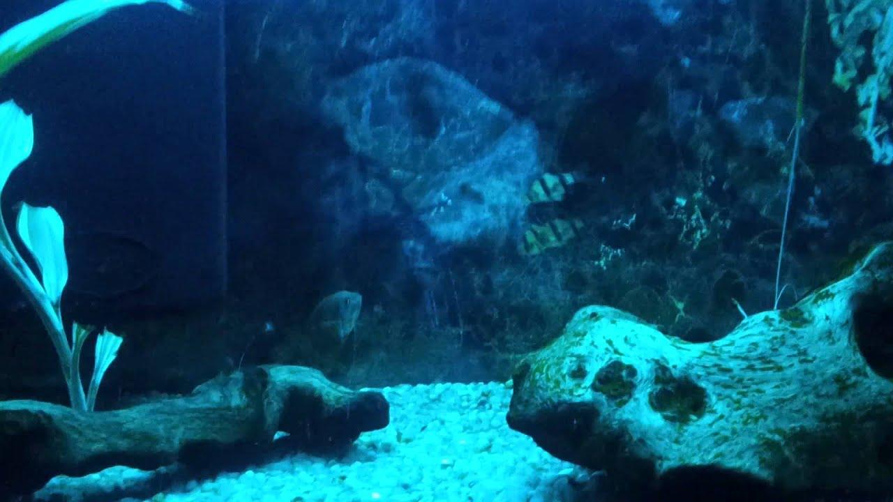 Background of fish tank wallpaper joy studio design for Empty fish tank