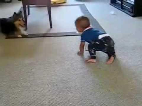 فيديو,::,كلب,يداعب,طفل,بطريقة,مضحكة , www.christian- dogma.com , christian-dogma.com , فيديو :: كلب يداعب طفل بطريقة مضحكة