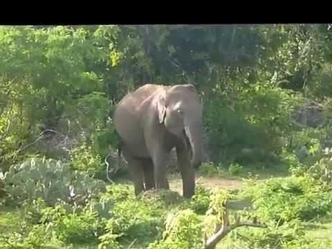 Yala National Park Srilanka Safari w Parku Narodowym