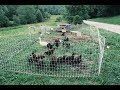 How To Get Chickens To Do Most Your Gardening