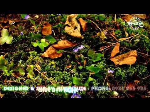 [SUB] Khóc Thầm - Hoàng Châu