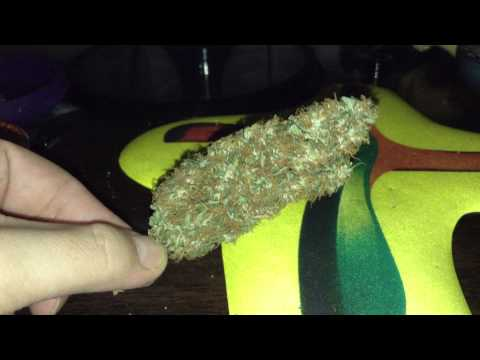 Resultado Colheita Cannabis Medicinal - White Widow