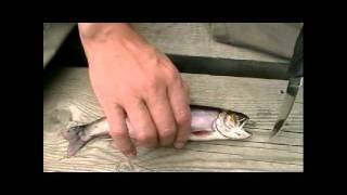 HOW TO GUT AND SKIN A FRESH WATER FISH (TROUT)