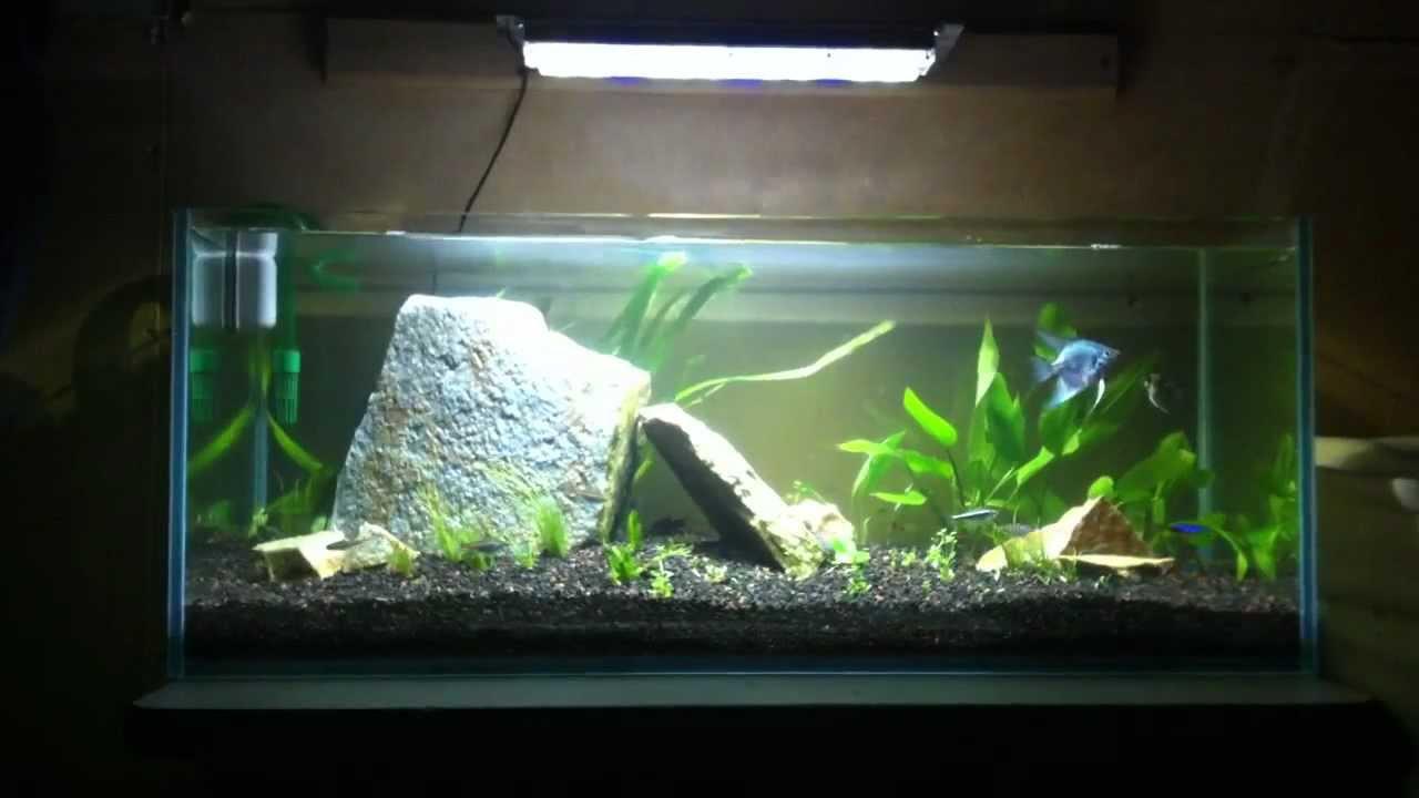 20 long planted aquarium youtube for 20 gallon long fish tank