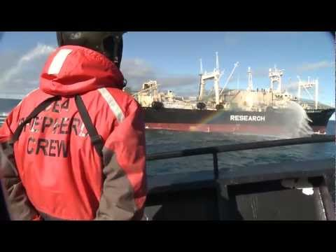 Bob Barker Encounter with Yushin Maru 2 Attempting to Transfer Poached Whale to Nisshin Maru
