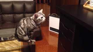 引き出しを開ける猫