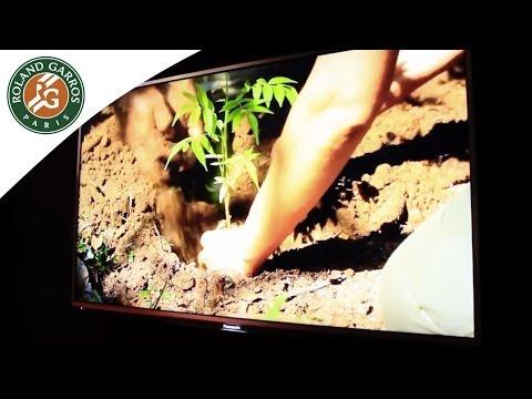 Graine d'énergie, la création d'une forêt à Roland Garros