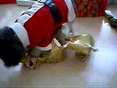 Dog opens her Christmas Gift - Purina Dog Chow 2011-12-27 16:28