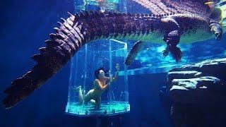 5 Hồ Bơi Kỳ Lạ Và Độc Đáo Nhất Trên Thế Giới
