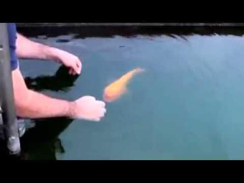 Un poisson bien éduqué