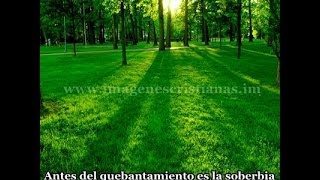 BIBLIA HABLADA (SAN MATEO),,,,,,COMPLETO Y CASTELLANO