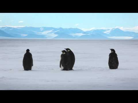 Antarctica: A Year On Ice Teaser