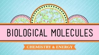 Biological Molecules: You Are What You Eat