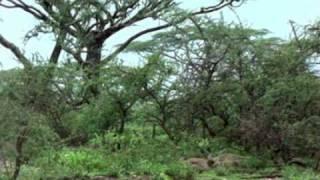 NATURALEZA-FAUNA-FLORA-Africa El Paraiso Del Espino