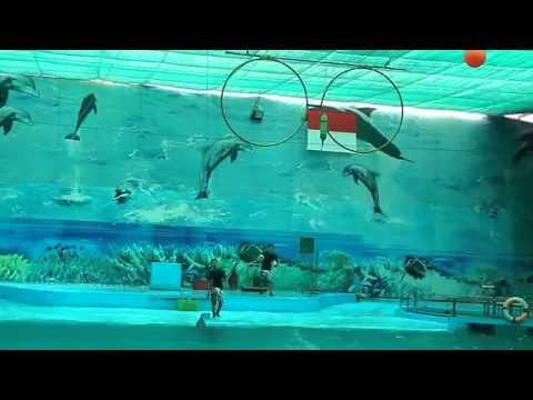 Xiếc cá heo  Suối Tiên 01 01 2014 HÓTclip vui hay nhất 2014