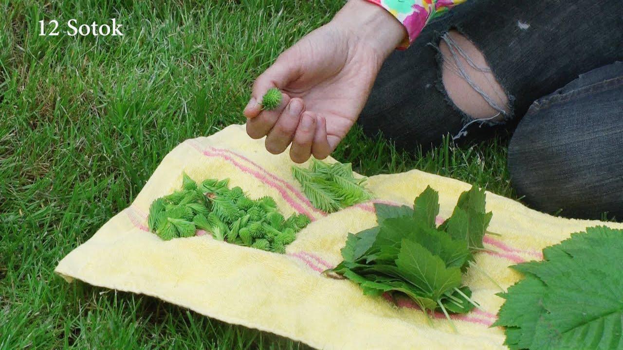 Как сделать заварку из листьев малины