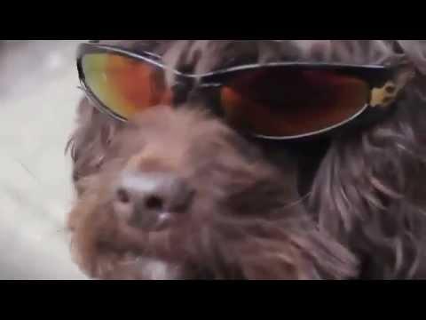 Chó nhảy Gangnam Style