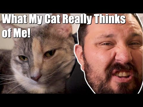 What My Cat Really Thinks of Me - Funny Cat Video