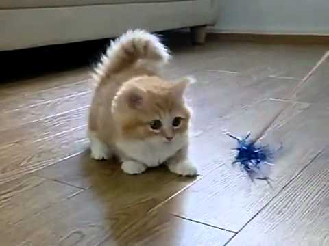 Fluffy Kitten Is Confused, Like Our FB Page http://www.facebook.com/pages/Full-Time-fun/222373874516533 This super cute kitty will definitely bring a smile to your face. Just look into...