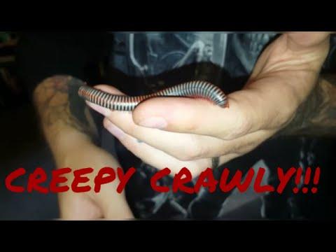 CREEPY CRAWLY INVERTS TARANTULAS and FUNNY ANIMALS