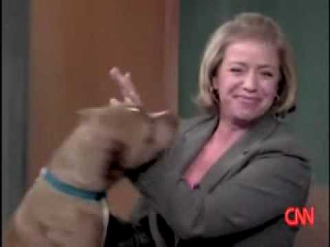 RAW: Canadian News Anchor ATTACKED by PitBull