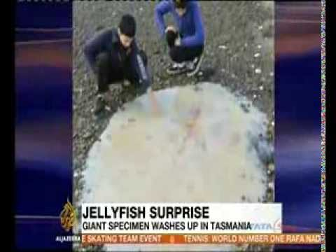 Giant jellyfish found on Australian beach