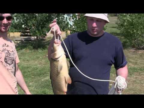 Ахтуба, Август 2013, рыбалка как из пулемёта, сазан,  судак, щука, берш