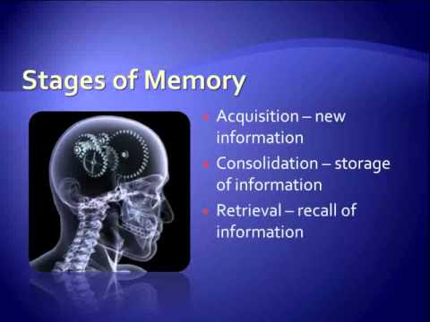 what supplements should i take to help with memory