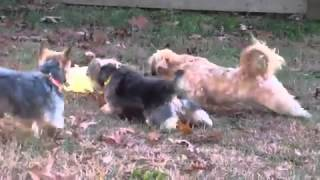 Former Puppy Mill Dogs Learning to PLay for the First Time