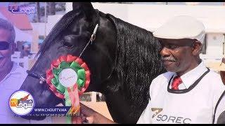 الجديدة تحتضن النسخة الثانية لملتقى الخيول البربرية والعربية البربرية بمشاركة أجود الخيول في المغرب    |   روبورتاج