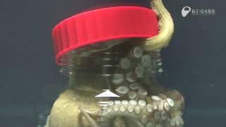 Kemampuan menakjubkan dari gurita,