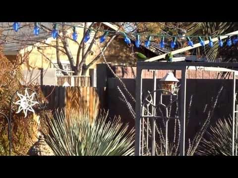 1-17-14 Lovebirds in the backyard - Phoenix, AZ